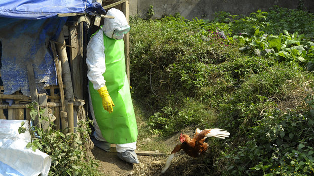 Health workers in Nepal culled chickens and destroyed eggs following an outbreak of bird flu in Kathmandu in October 2012. (AFP/Getty Images)