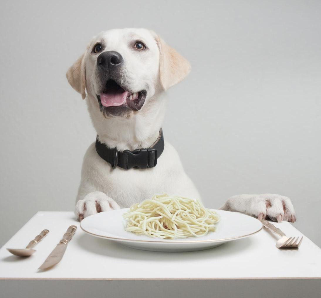 Can Dogs Digest Spaghetti