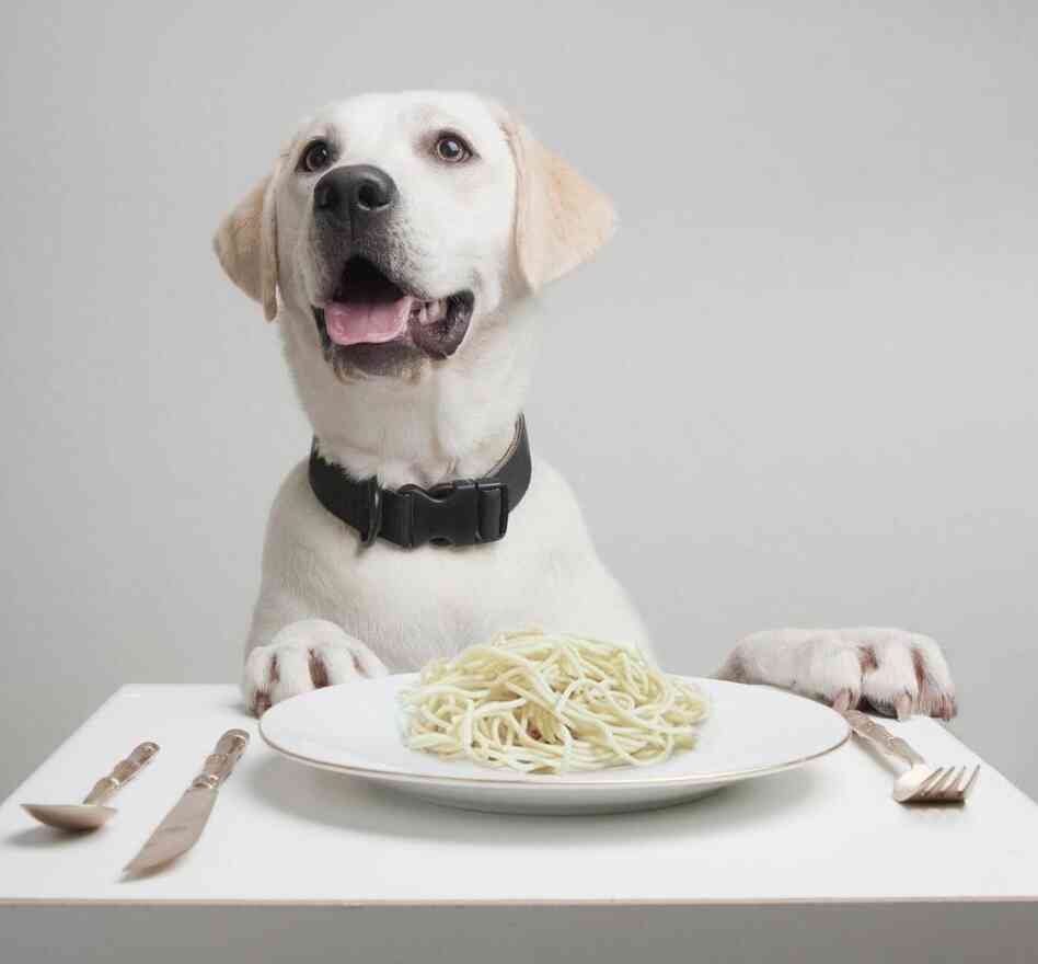 Got spaghetti? Dogs digest starch more efficie