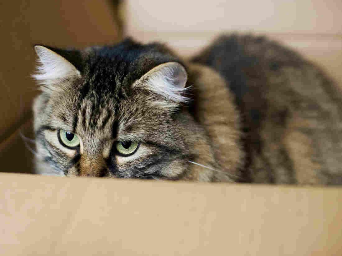 Not Schrödinger's (unfortunate) cat.