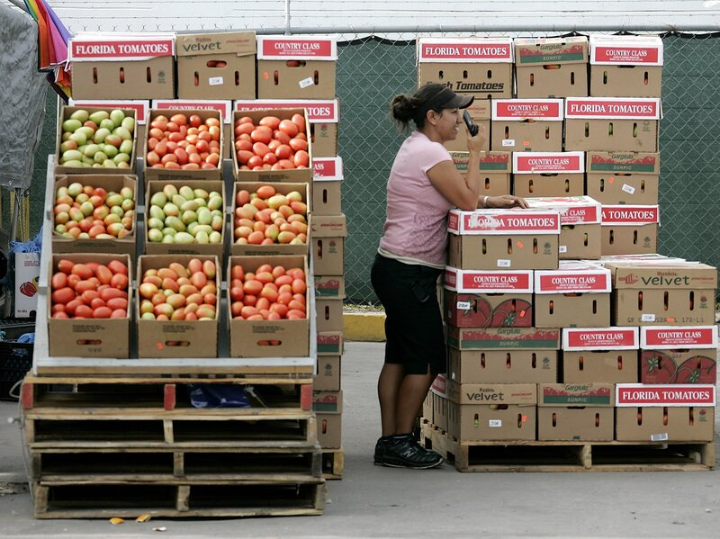 Fla  Tomato Growers Say Mexico Trade Deal Is Rotten : NPR