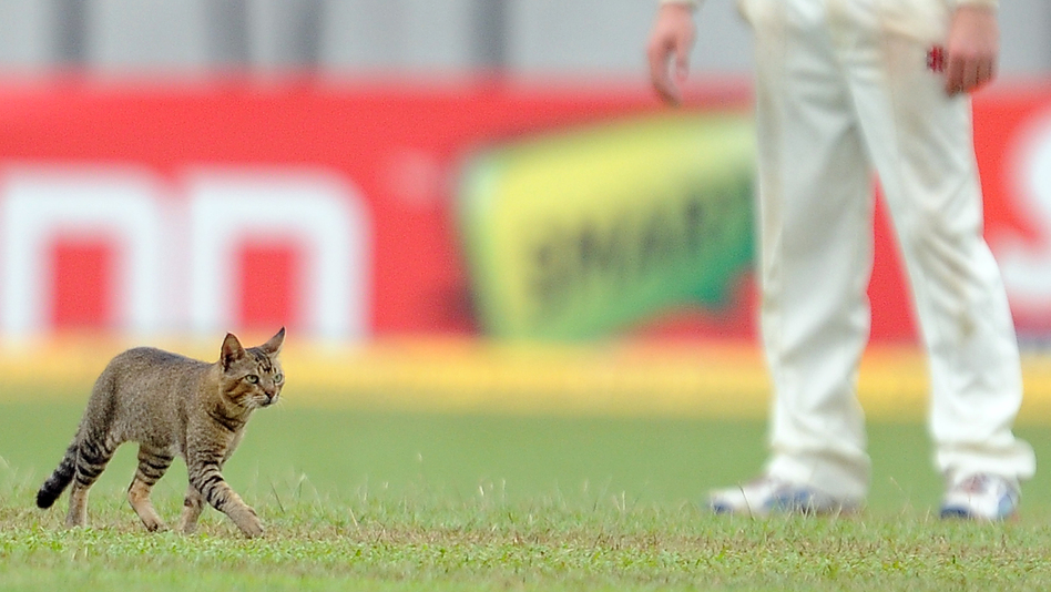 Here Kitty: New Zealand cricketer Kane Williamson looks on as a cat walks on the outfield during a test match between Sri Lanka and New Zealand. (AFP/Getty Images)