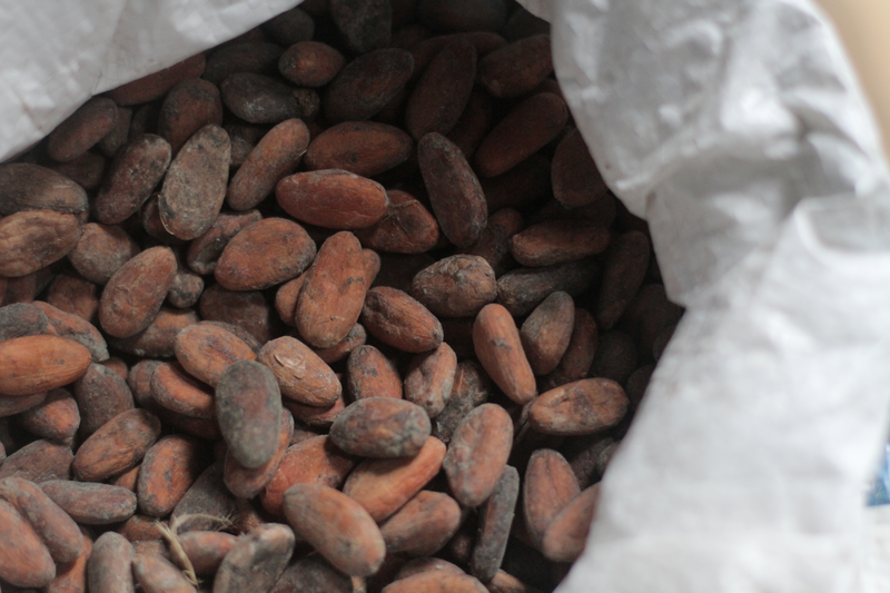 Some of the medicinal plants are quite familiar, but the Terraba use them in unique ways. Cacao butter serves as a natural sunscreen and anti-aging face cream.