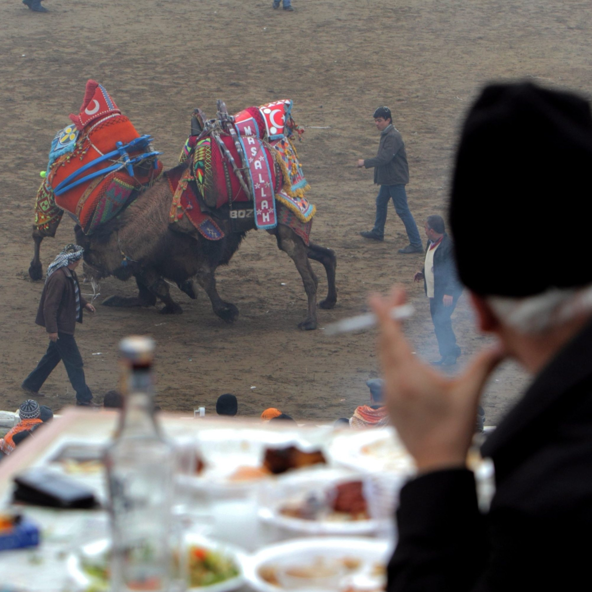 People watch wrestling camels as they enjoy a meal and the Turkish national drink raki during the Camel Wrestling Championship in Selcuk, on Jan. 15, 2012.