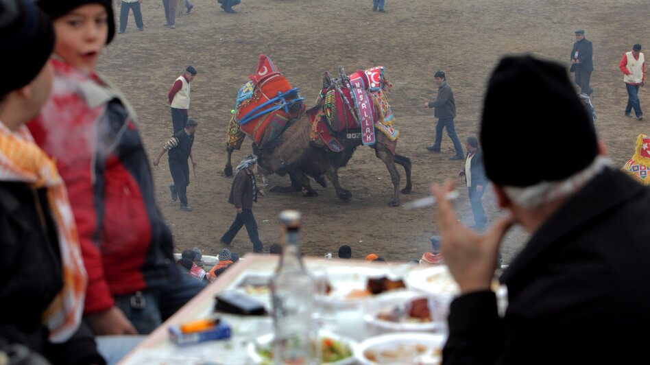 People watch wrestling camels as they enjoy a meal and the Turkish national drink raki during the Camel Wrestling Championship in Selcuk, on Jan. 15, 2012. (EPA /Landov)