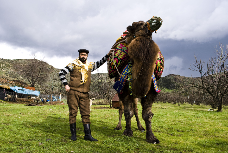 "Ismail Egilmez shows off his prize camel, Cilgin Hasan, the day before his championship bout. In the winter, Ismail spends over six hours a day with Cilgin. ""My camel is like my son,"" he said."