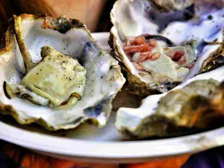 Along the East Coast, wild oysters have been disappearing, but the number of farm-raised oysters is exploding.