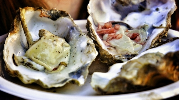Along the East Coast, wild oysters have been disappearing, but the number of farm-raised oysters is exploding. (iStockphoto.com)