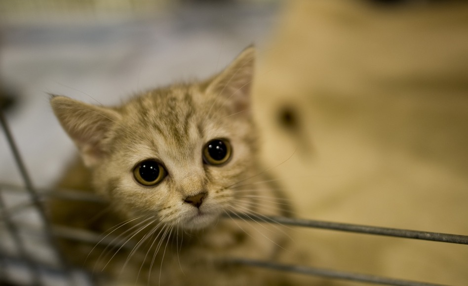 Emma looks out from her cage at a pet trade show in Dresden, Germany. (AFP/Getty Images)