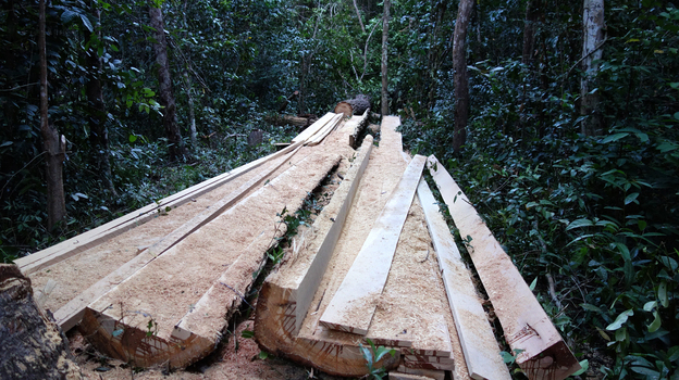Illegal logging is widespread in Cambodia, and efforts to prevent it have had only a limited impact. Much of the wood is destined for China. (NPR)