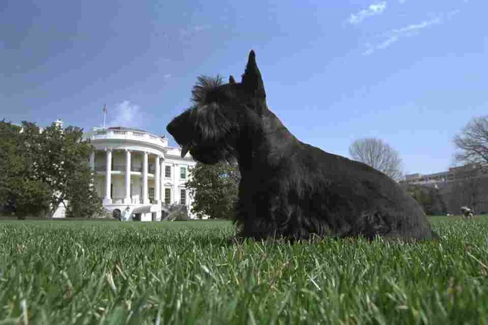 Barney at the White House.