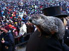 Punxsutawney Phil climbs on the shoulder of handler John Griffiths. The groundhog did not see his shadow during the 127th Groundhog Day Celebration in Punxsutawney, Pa., on Saturday.