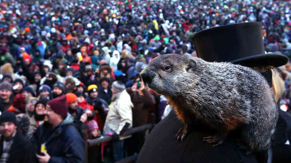 Punxsutawney Phil climbs on the shoulder of handler John Griffiths. Th