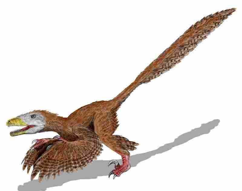 Deinonychus antirrhopus used feathers to keep their balance when holding down struggling prey.