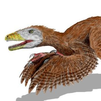 Deinonychus antirrhopus used feathers to keep their balance when holding down struggling prey.