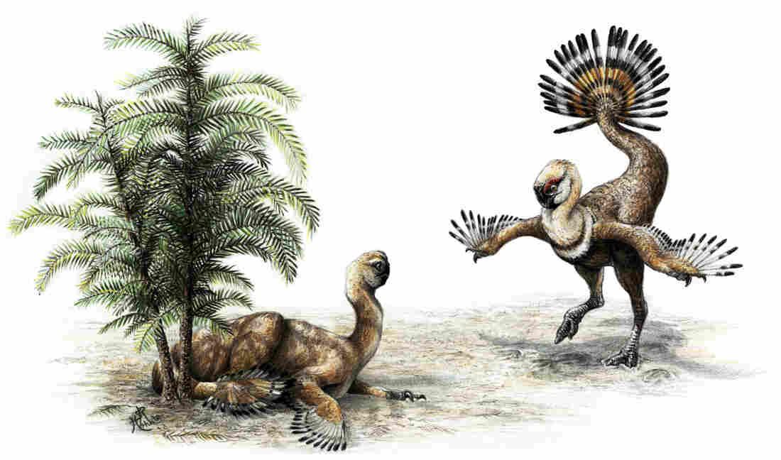 Oviraptorosaur shook it's tail feathers to impress the ladies.