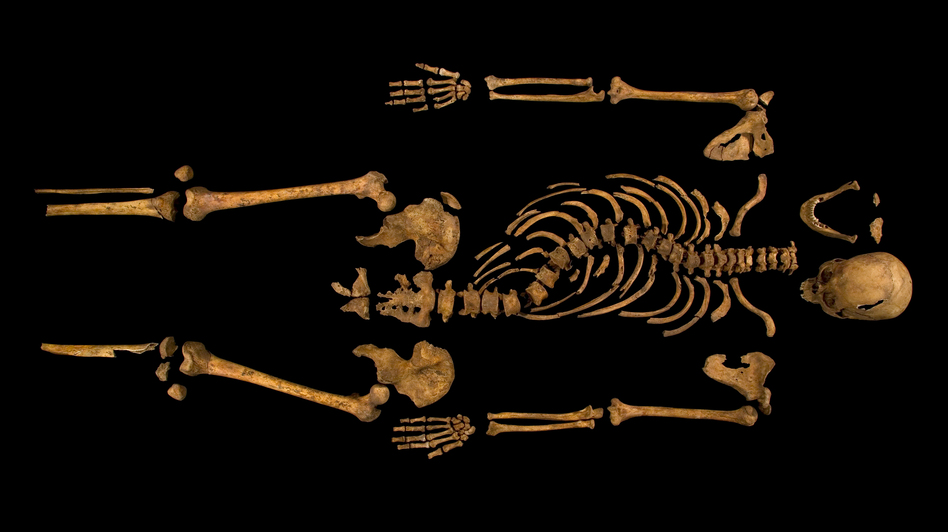 A skeleton with a cleaved skull and a curved spine entombed under a parking lot is that of Richard III, scientific tests confirmed. (Reuters/Landov)