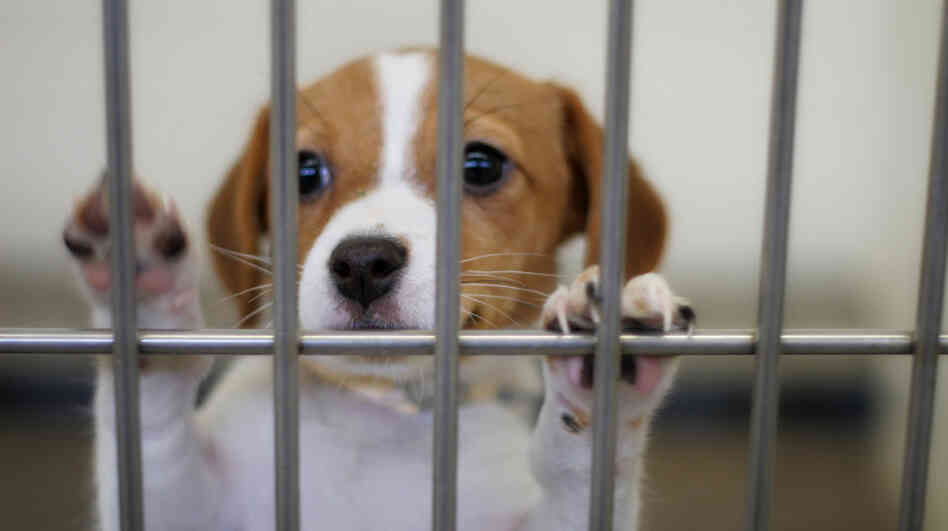 A dog eagerly awaits adoption in an animal shelter.