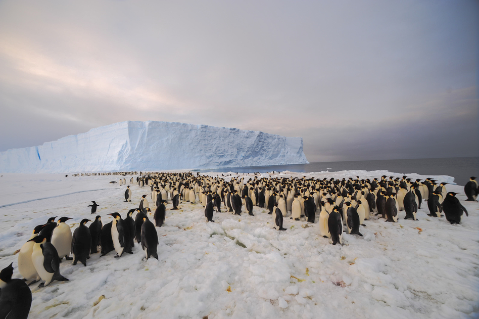 While Studying Ice, Researchers Discover Huge Penguin Colony