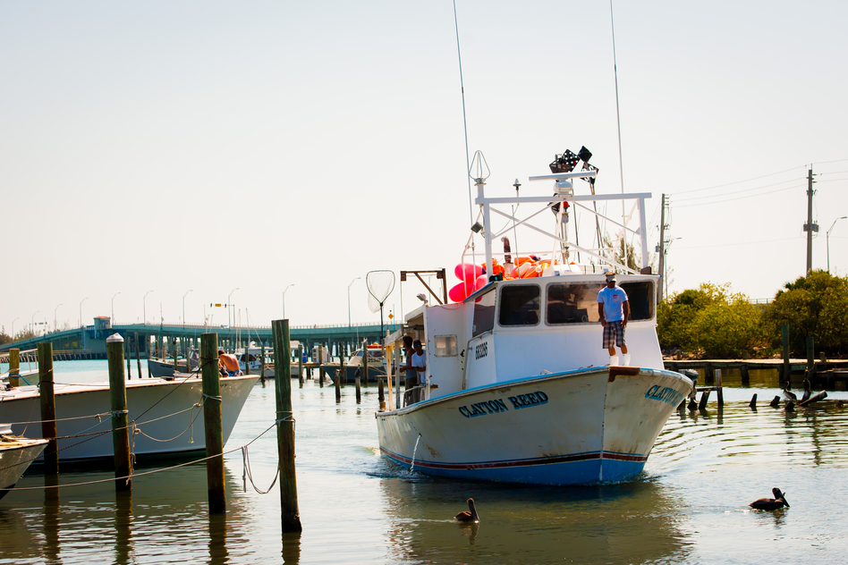 Workers in Fort Pierce, Fla., unload thousands of pounds of catch from a long-line boat that was out for 10 days. (Chip Litherland for NPR)