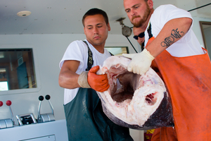 Dylan Rivera (left) and Travis Nachreiner lift a large swordfish out of the boat.