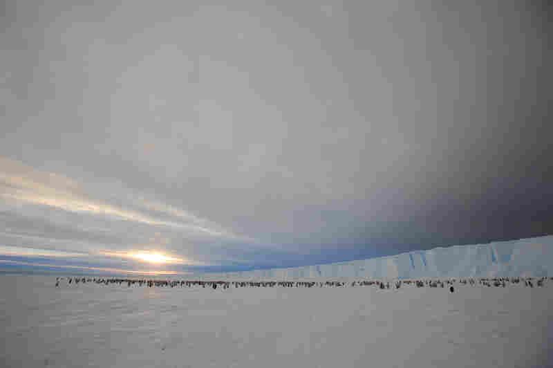 The colony lives on Antarctica's Princess Ragnhild Coast.