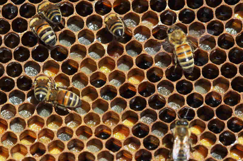 Trypophobes might not have a problem eating honey, but it's doubtful many are beekeepers.