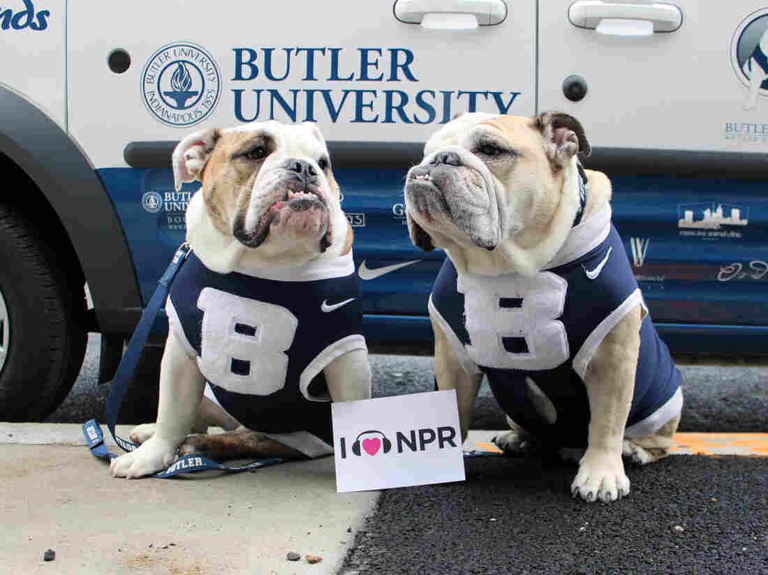 Butler University mascots Blue II & III (Trip) at NPR HQ in Washington, DC.