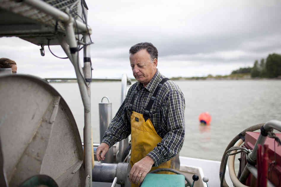 "Capt. Gordon Botkin, aboard the Miss Delta in the Fraser River near Vancouver, is helping researchers study the sockeye salmon population. The MSC recently certified sockeye as ""sustainable,"" even though scientists argue that their population is declining."