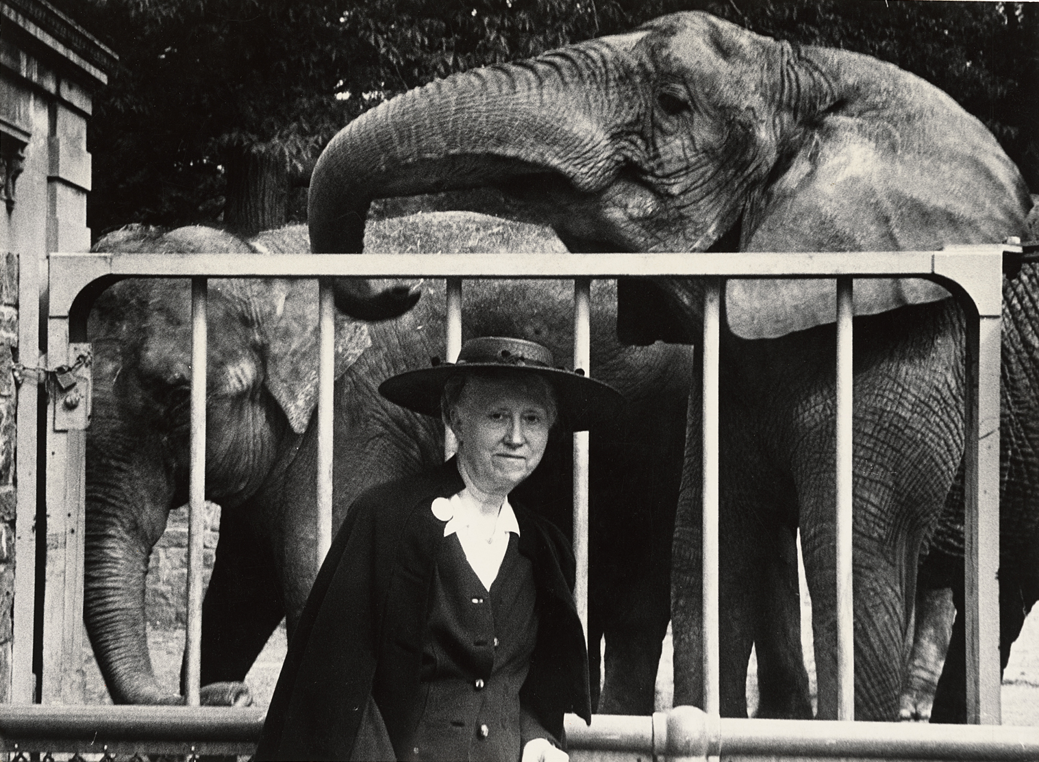 marianne moore on bird witted essay Marianne moore (1887-1972) | on moore's life and career | a moore  chronology | on poetry | on the fish | on sojourn in the whale | on a  grave | on.