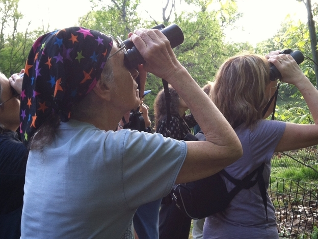 Saphir leads a bird walk in Central Park during spring migration last year. (NPR)