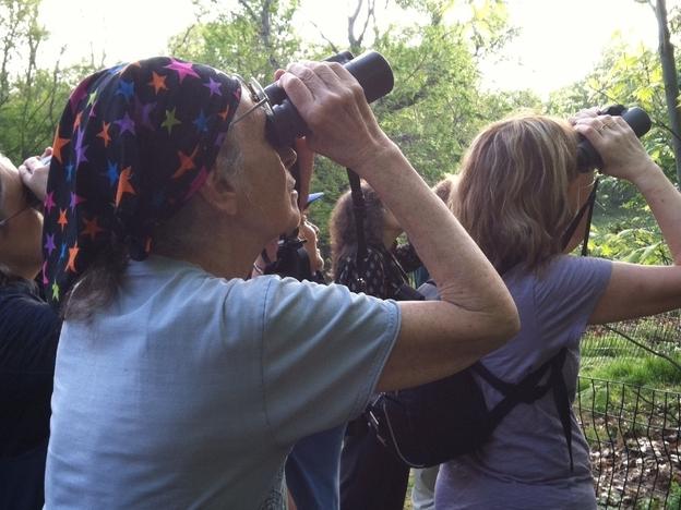 Saphir leads a bird walk in Central Park during spring migration last year. (NPR)