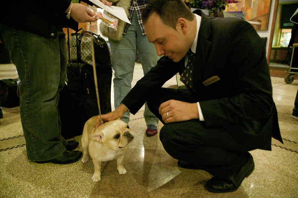 Grymek welcomes another French bulldog, Glamour, to Hotel Pennsylvania. The hotel is across from Madison Square Garden, where judging of the main events will be held Tuesday.