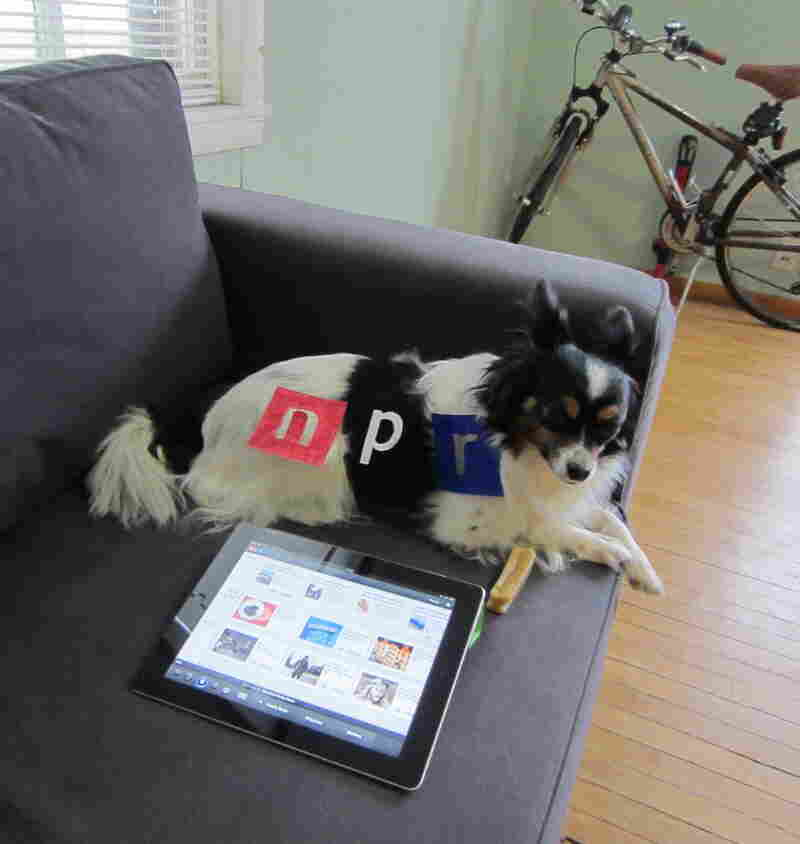 """#2 """"Toby, a Papillon and an avid listener of Wisconsin Public Radio, hails from Madison, WI. He starts his mornings right by listening to Morning Edition on the NPR iPad App, still dressed in his NPR dog pajamas, and chewing his morning bone!"""""""