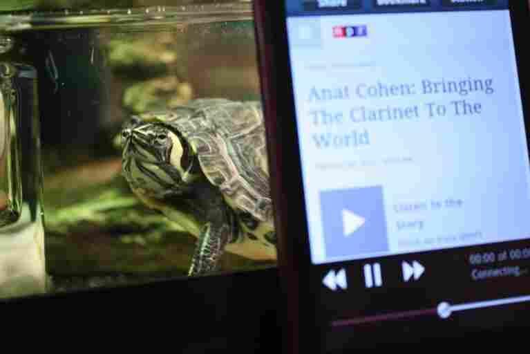 "#3: ""Burt the Turt loves listening to NPR on 88.9 WFSU in Tallahassee, FL."""