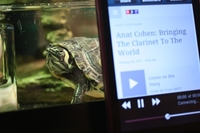 "#3: ""Burt the Turt loves listening to NPR on 88.9 WFSU in Tallahassee, FL."""