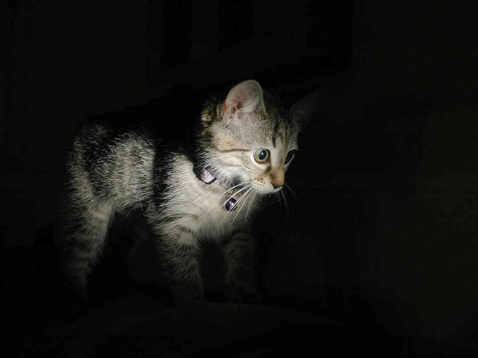 Scientists found that darkness worked far better than they expected as a treatment for kittens with lazy eye.