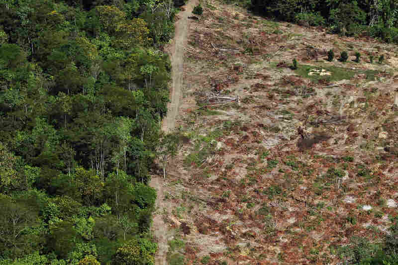 While environmentalists and indigenous groups oppose the Belo Monte dam, many Brazilians support the project.