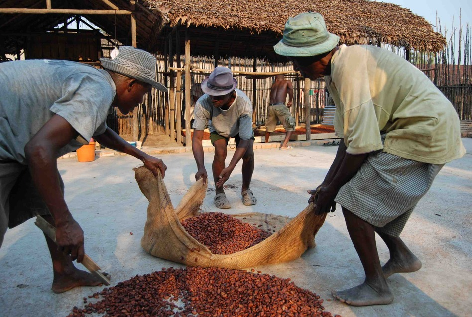 Workers in Madagascar prepare cocoa beans for drying. The process has a big effect on the quality of the finished chocolate. (Courtesy of Madécasse Chocolate)
