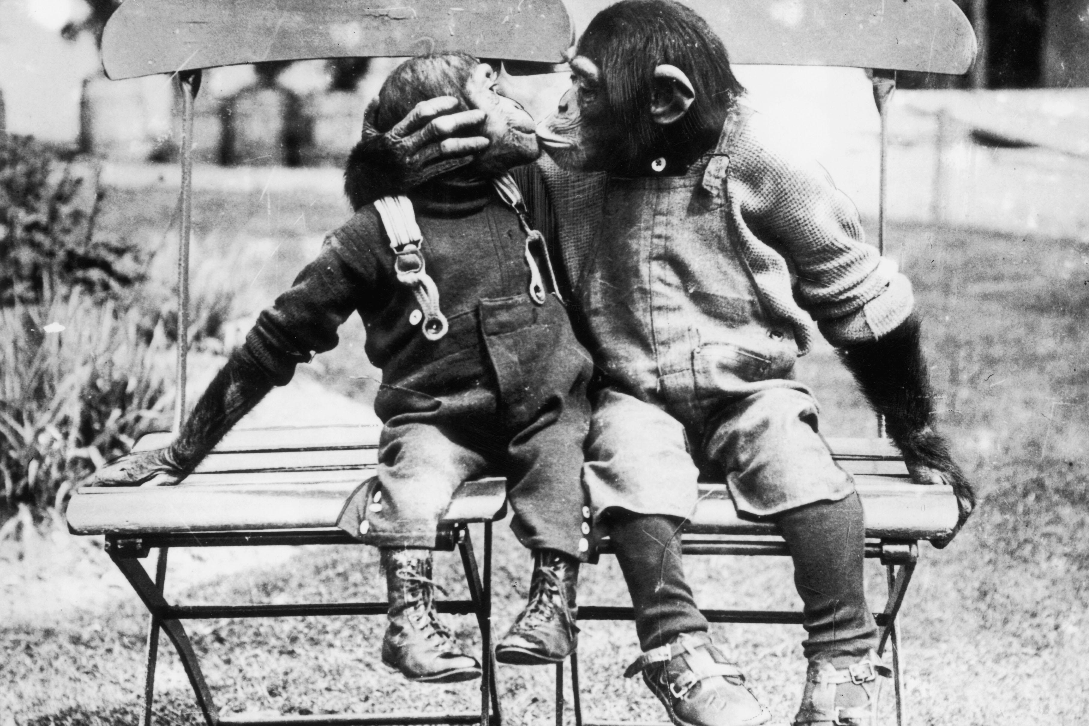 Monkey love kiss