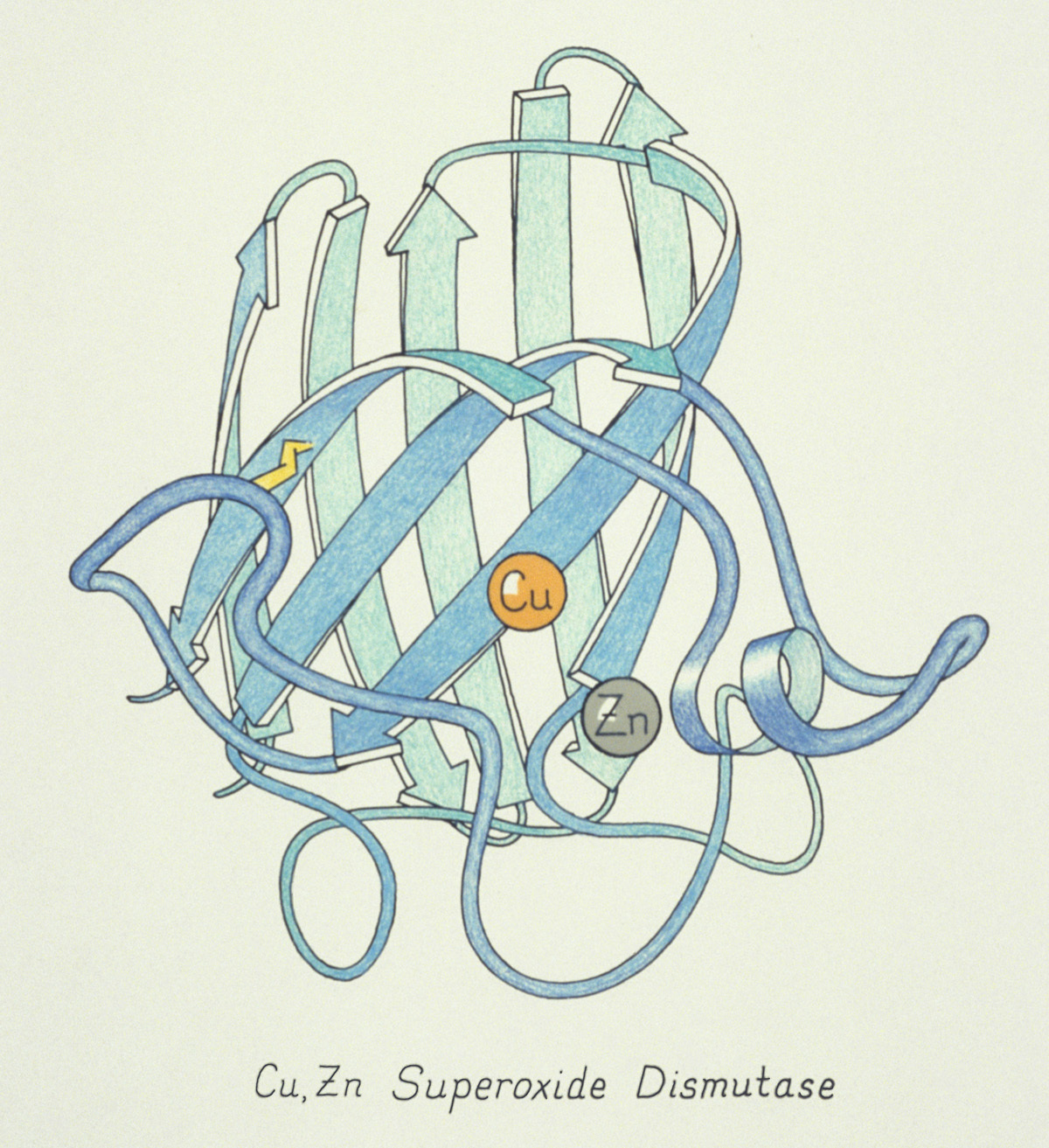 One of the original ribbon drawings done by Jane S. Richardson in 1981