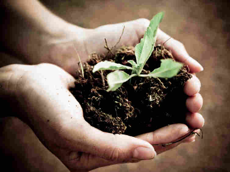 seedling.