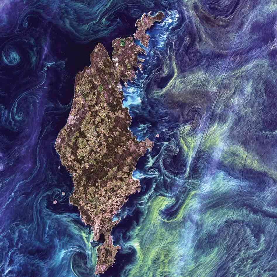 Phytoplankton Bloom, Baltic Sea, 2005 Massive congregations of greenish phytoplankton swirl in the dark water around Gotland, a Swedish island in the Baltic Sea. Phytoplankton are microscopic marine plants that form the first link in nearly all ocean food chains. Blooms of phytoplankton, occur when deep currents bring nutrients up to sunlit surface waters.