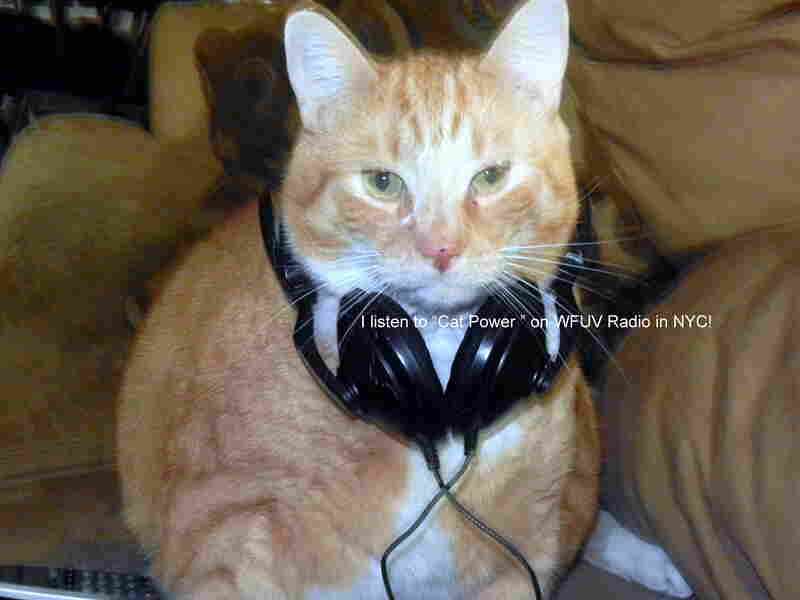 """My cat, Sunny Boy, listens to NPR on WFUV in New York City. His favorite artist is Cat Power, but I know he also likes Dr. Dog!"""