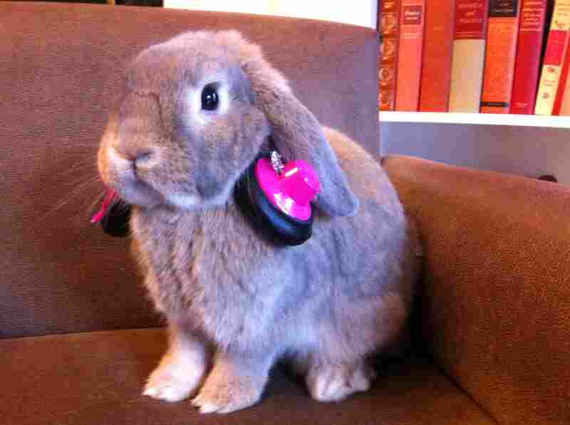 """Cinnamon says NPR Member station KPCC [Southern California] is Buntastic."""