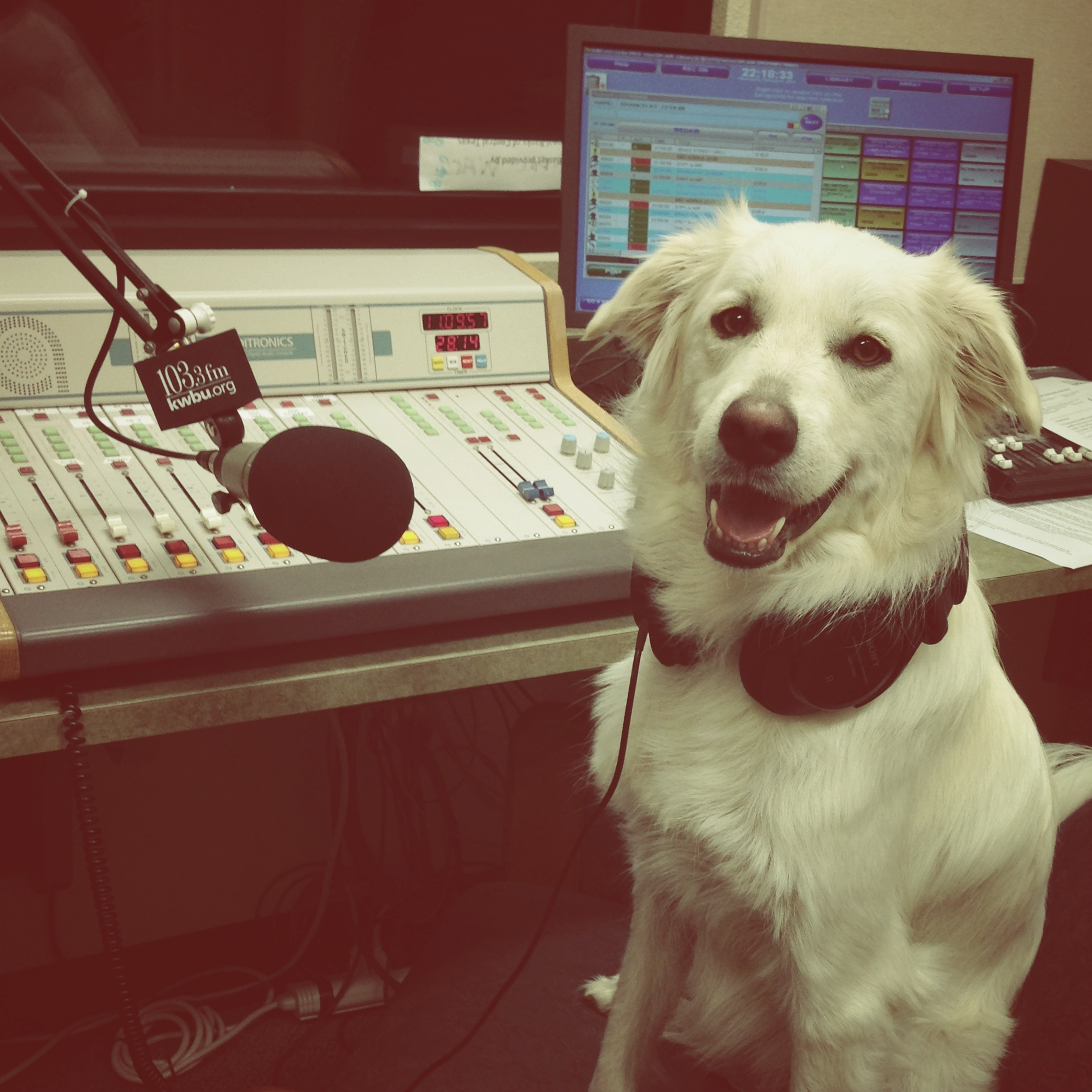 """Evie loves that her owner is an NPR member so she can guest host all her favorite shows! KWBU FM in Waco [Texas] is Evie's NPR!"""