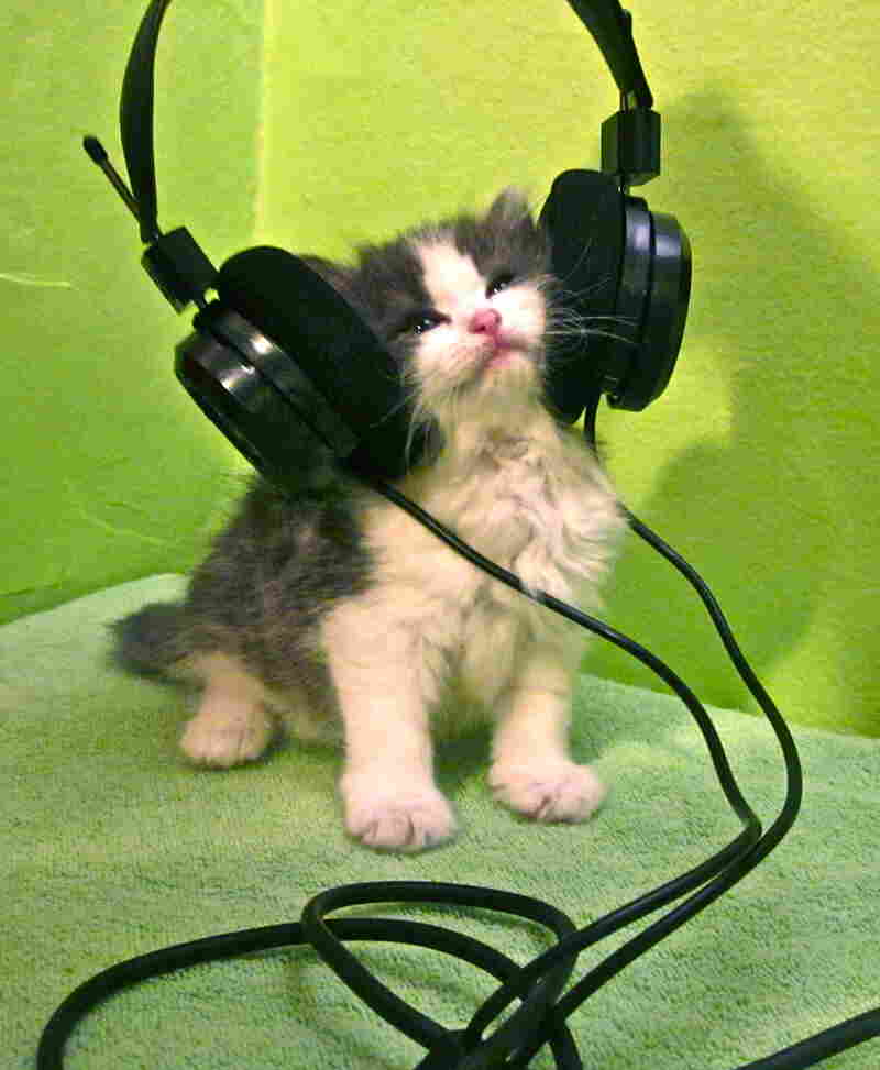 """The Kitten Who Says Ni! can not be swayed by feathers or wet meatz when listening to our favorite member station WHYY in Philadelphia!"""