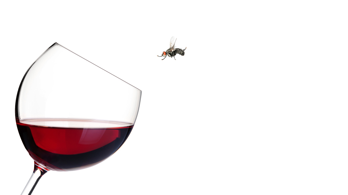 For Fruit Flies, Alcohol Really Is Mommy's Little Helper
