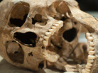 This skull may have better teeth than you.