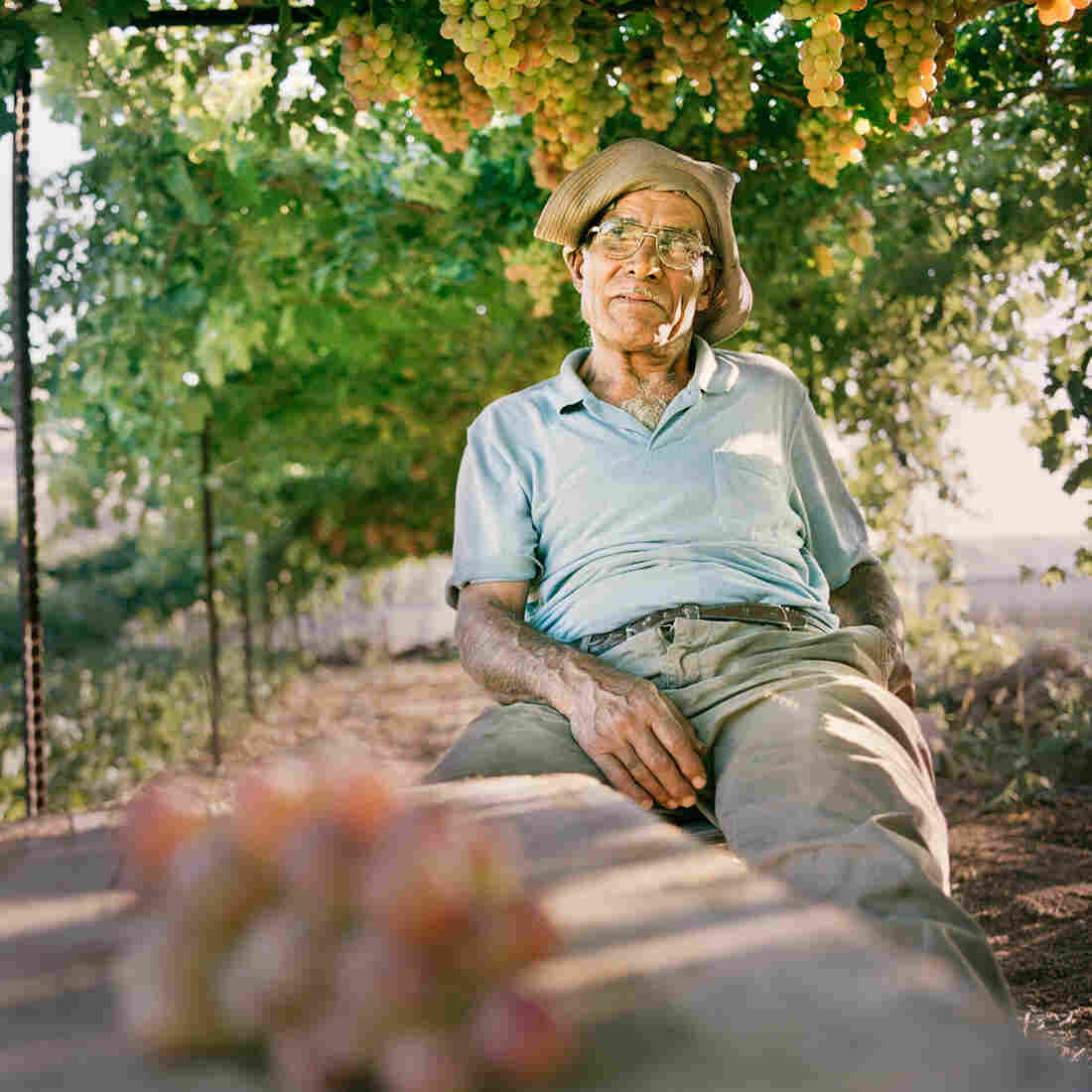 Mahmud, at his vineyard in Wadi Fuqin, Palestinian territories